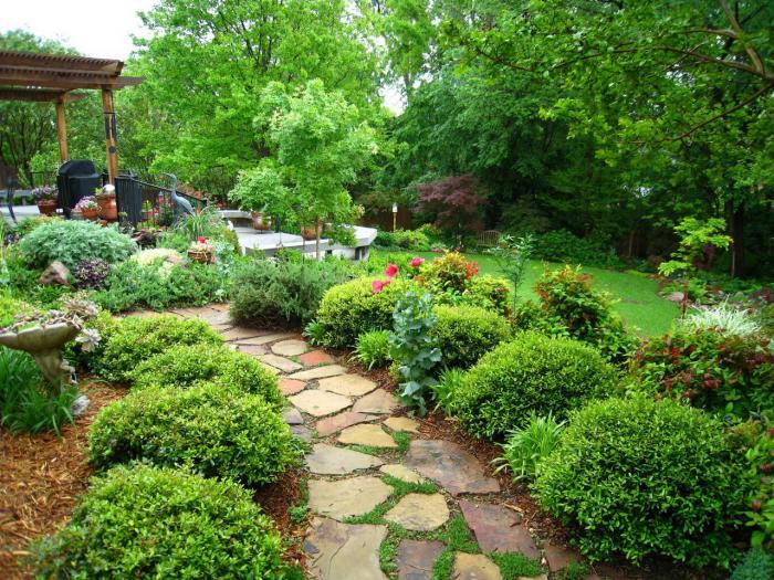 Облагораживание частных и общественных территорий зелёными насаждениями