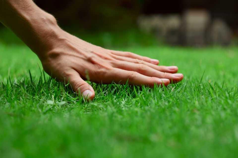Советы и технологии посадки газона