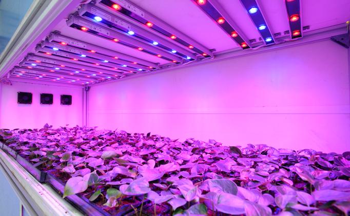 Фитолампы для растений: преимущества и ключевые характеристики. Как выбрать фитолампу