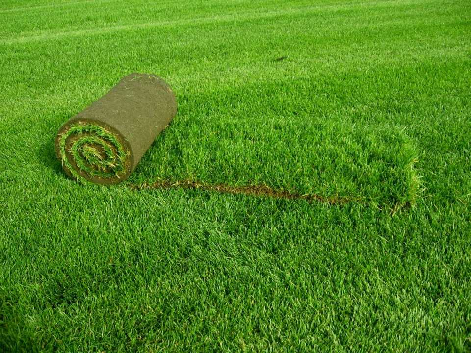 Искусственный газон в рулонах – правильный выбор и особенности укладки