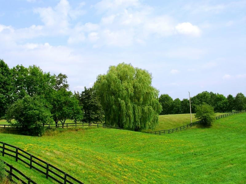 Преимущества продажи земельных участков