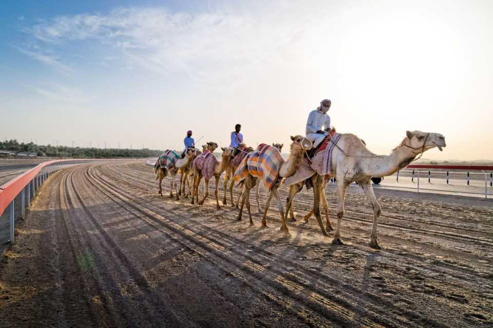 В Дубае открыта первая в мире клиника для верблюдов