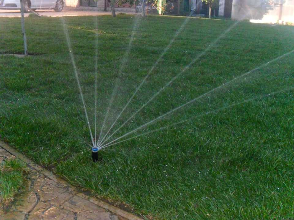 Частота полива рулонного газона